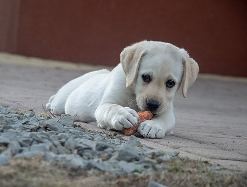pup enjoying a bite