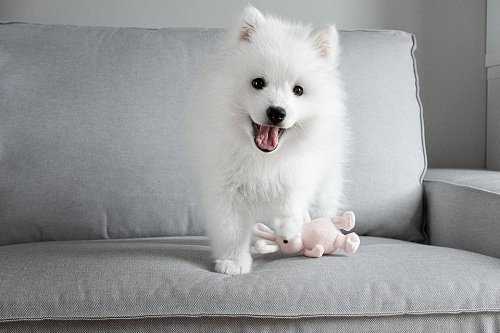 puppy playing with a safe toys