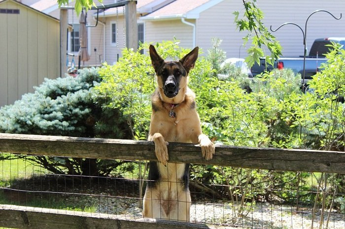 Best Custom Shape Wireless Dog Fence