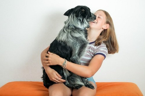 Expert Training Tips for New Puppy Owners