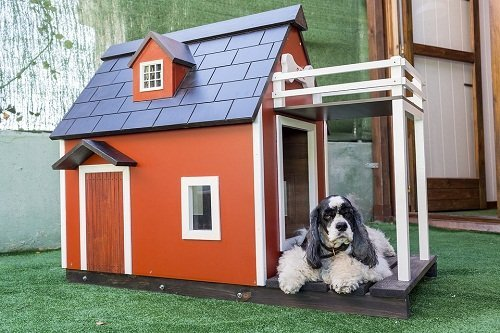 Dog Heaters For Outdoors