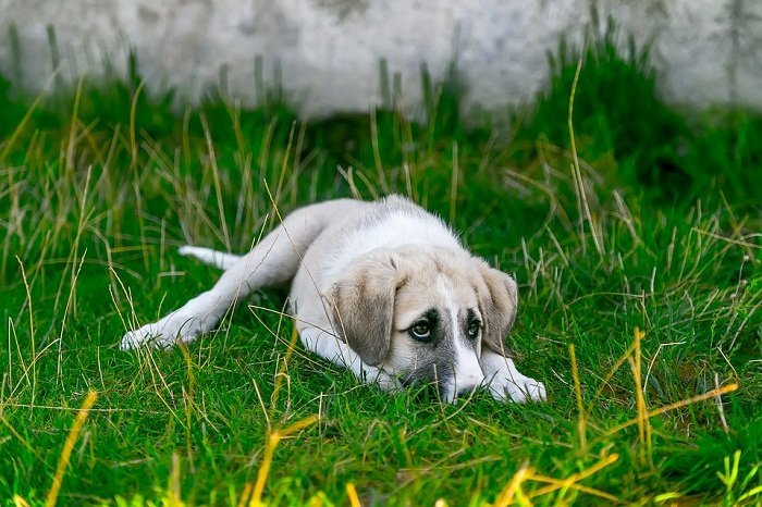 When Should You Rehome a Puppy?