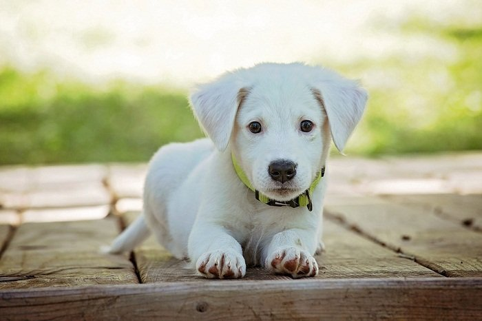 How To Prepare For The Arrival Of A New Puppy