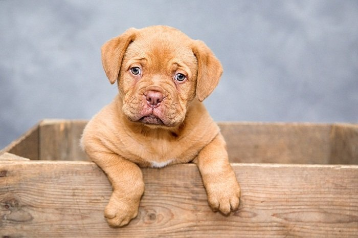 Best Age To Buy A Puppy