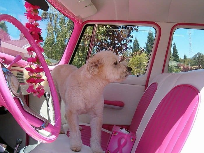 Best Dog Car Seat for Large Dogs